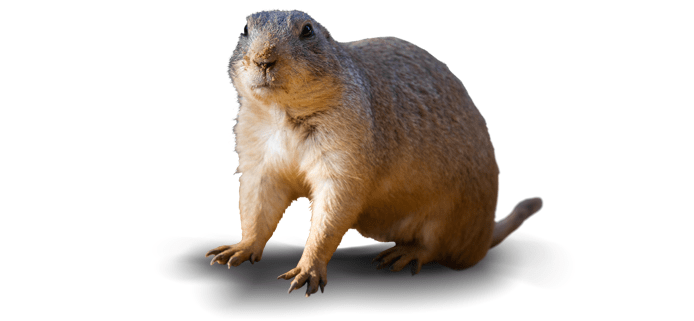 gopher on a white background