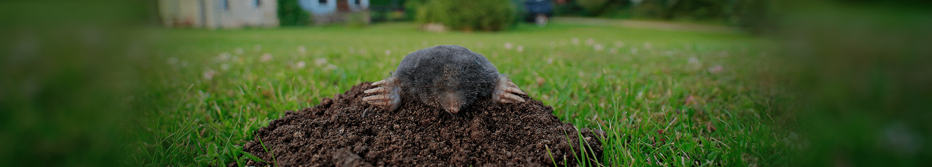 mole looking out of its hole